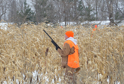 Field hunt at Sand Pine Pheasants